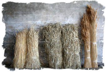 Thatching Straws - picture from Ben Thomas Thatching
